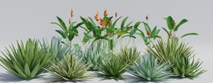 heliconia_Agave.jpg